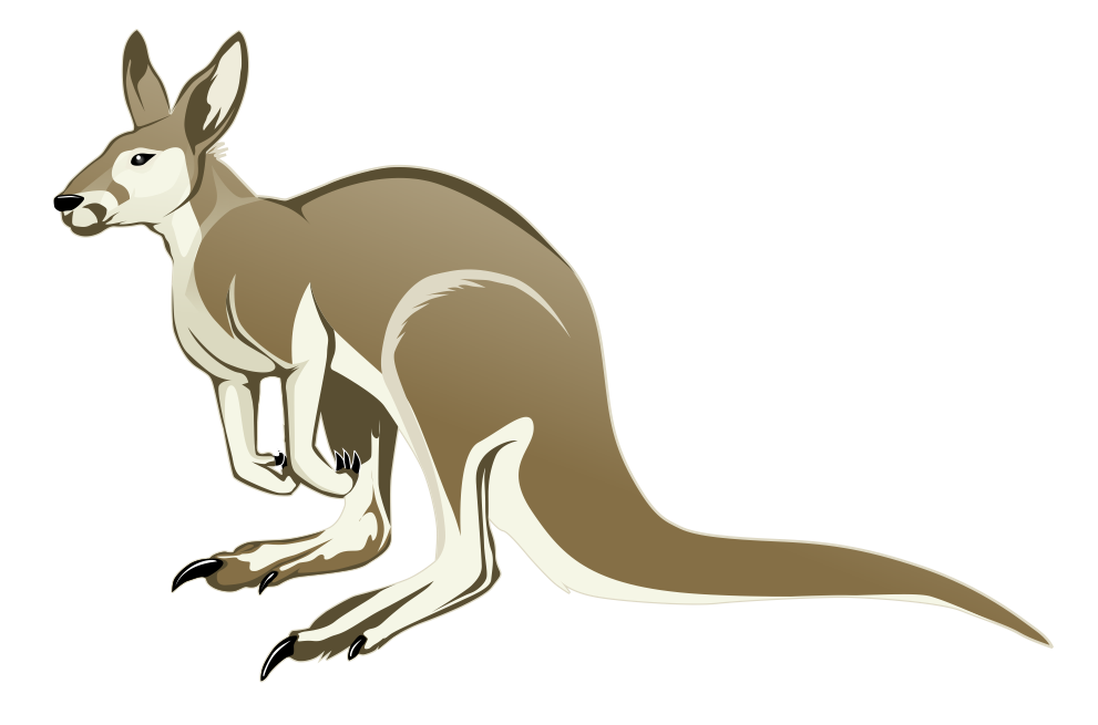 Drawing kangaroo illustrated. Animal drawings pinterest kangaroos