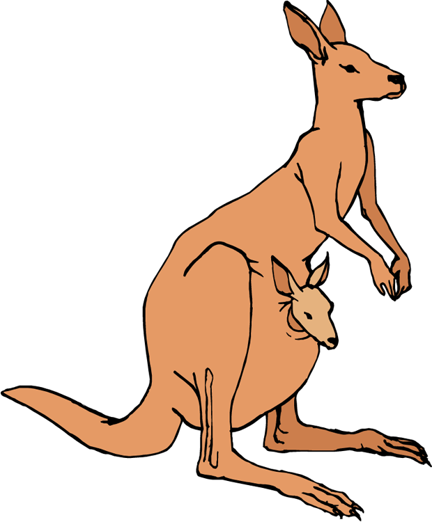 Drawing kangaroo pouch. Wallaby clipart