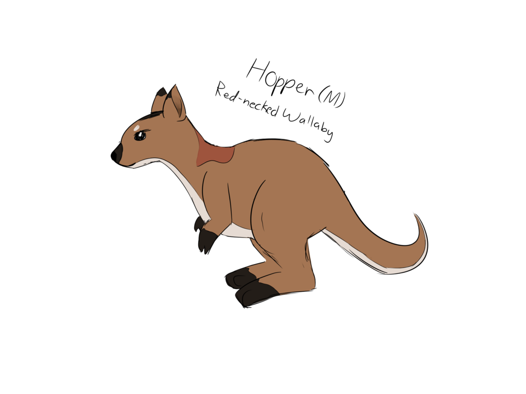 Drawing kangaroo red. Hopper the necked wallaby