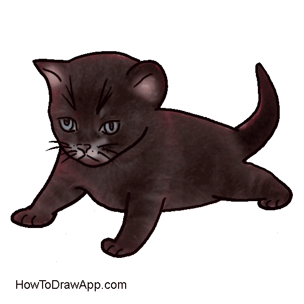 Drawing medium kitten. How to draw a