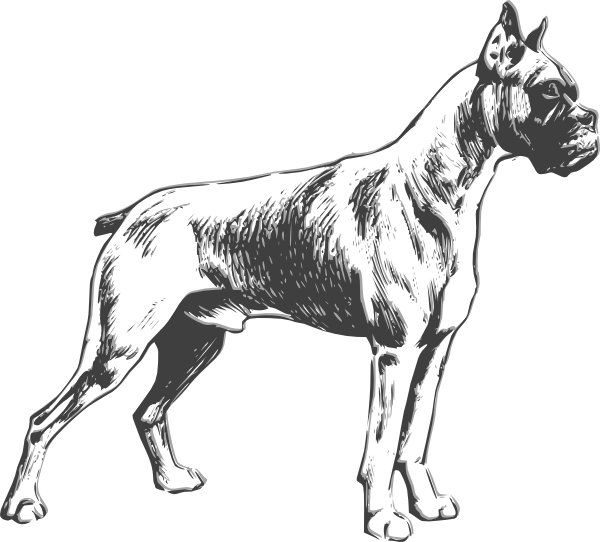 Outline drawings of dogs. Transformation drawing dog library