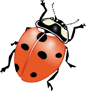 Vector bug drawn. Ladybug clip art at