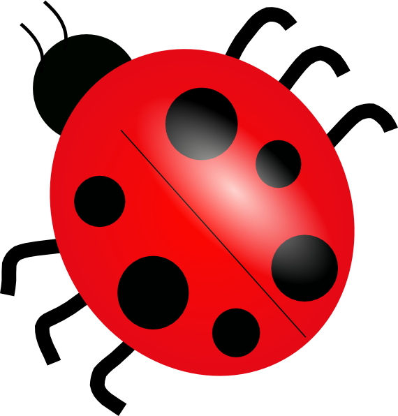 Drawing ladybug quick and easy. Ladybird cartoon google search