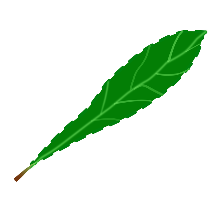 drawing leaf
