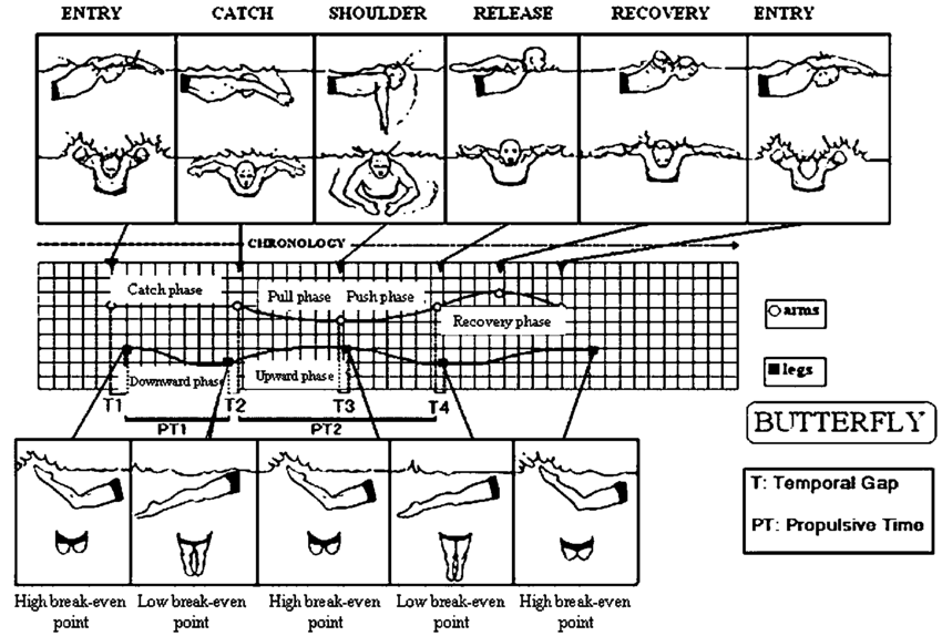 Swim drawing stroke. Synchronised structure of the