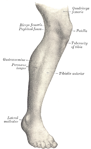 Drawing leg realistic. How to draw muscle