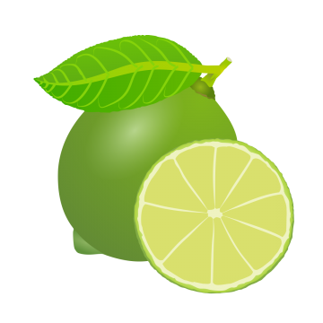 Drawing lemons free vector. Fruit image beautifully fresh