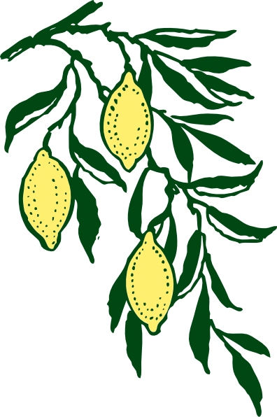 Drawing lemon leaf. Branch clip art at