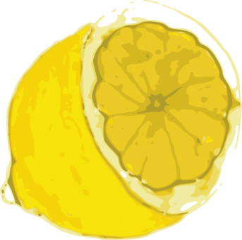 Drawing lemons free vector. Variegated pink lemon fruit