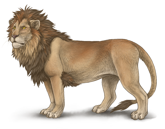 Drawing lions. Lioden male lion by