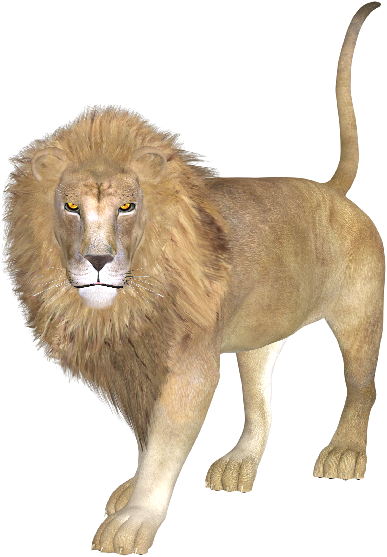 Drawing lions african lion. East asiatic transprent png
