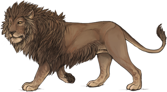 Drawing lions barbary lion. Karma lioden wiki a