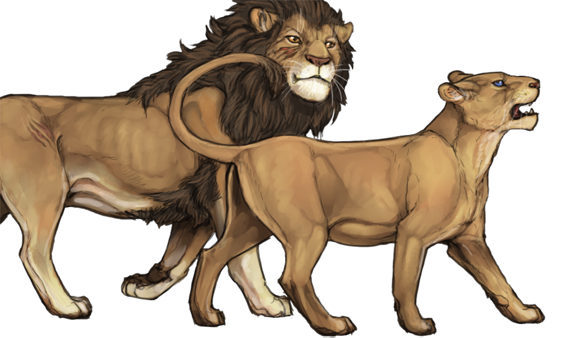 Drawing lions barbary lion. Karma lioden wiki you