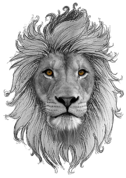 Drawing lions eye. Pin by nenemtattoo rj