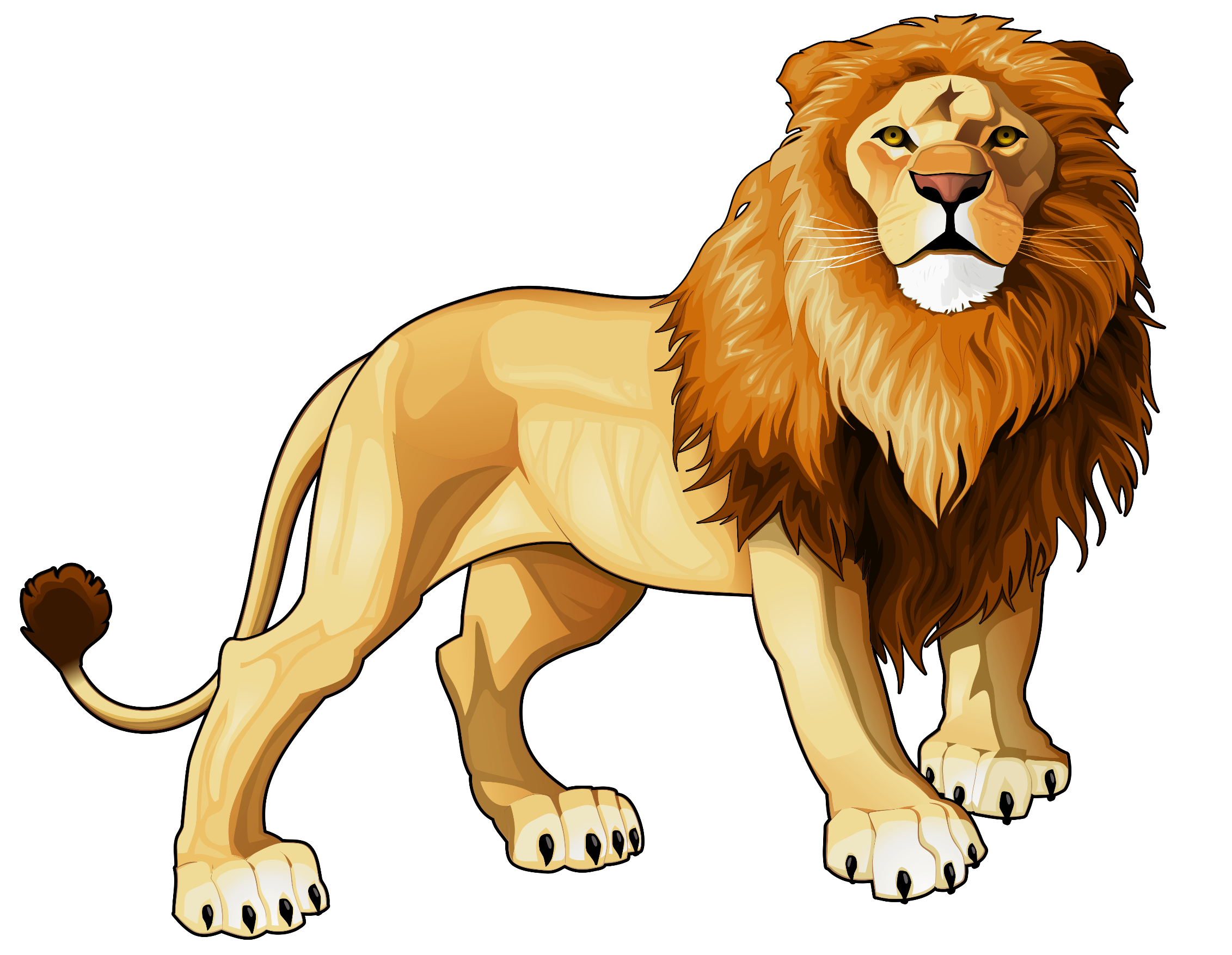 Drawing lions figure. Lion clip art head
