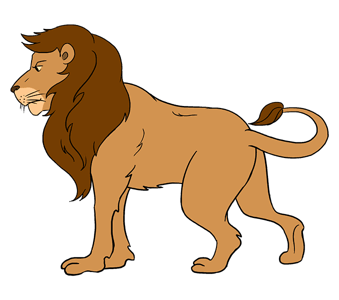 Drawing lions lione. How to draw a