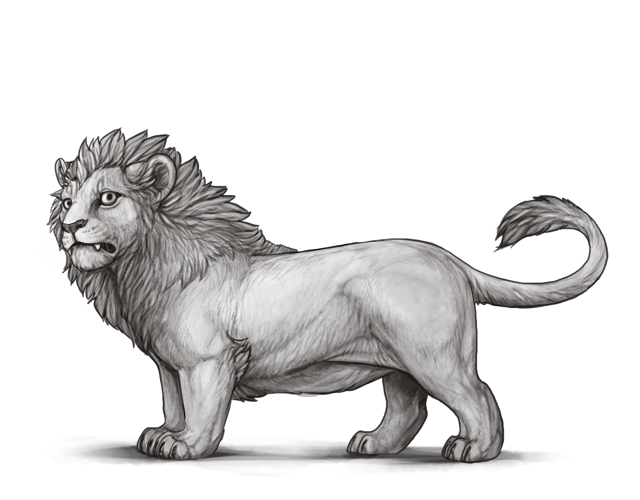 Drawing lions male lion. Lineart lioden for
