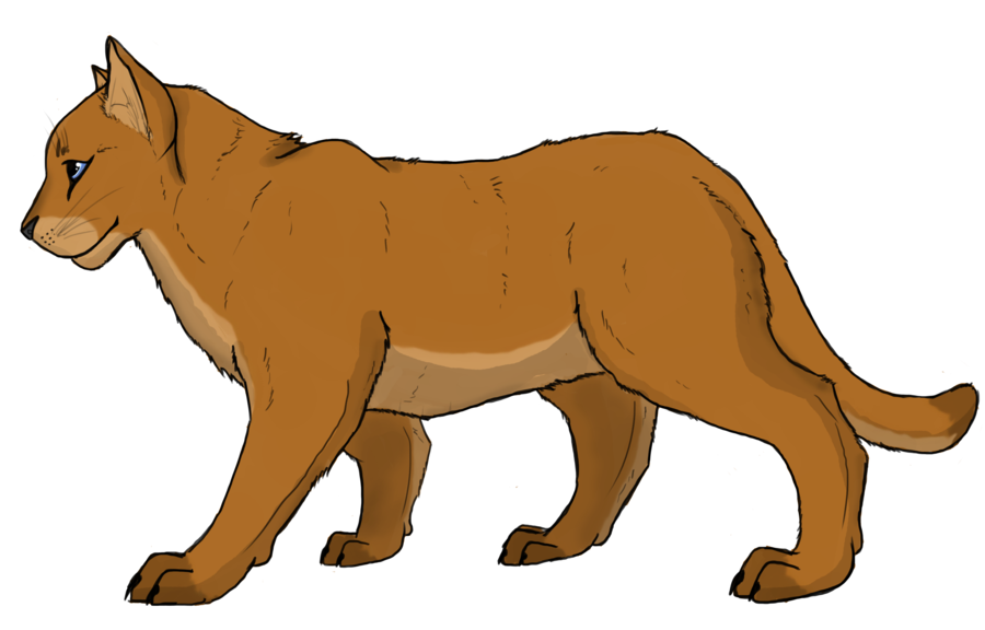 Drawing lions mountain lion. Cougar puma by animalible