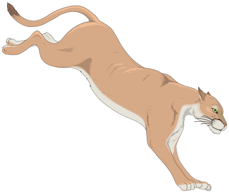 Drawing lions mountain lion. Image black and