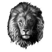 Drawing lions portrait. Lion by dinapolishop spreadshirt