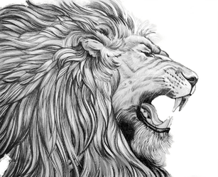 Drawing lions roaring. Lion omega opc