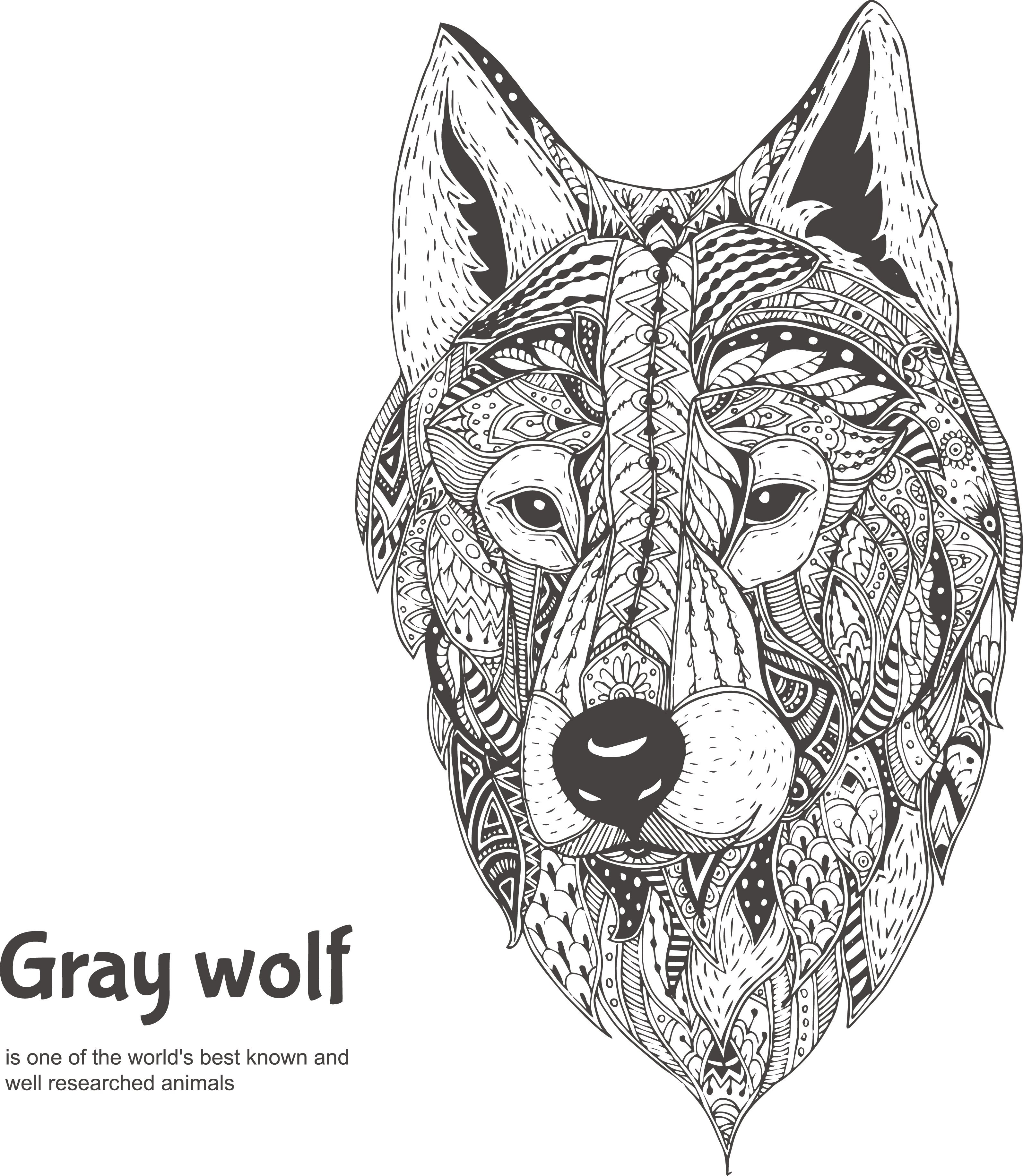 Drawing medium black and white. Gray wolf illustration hand