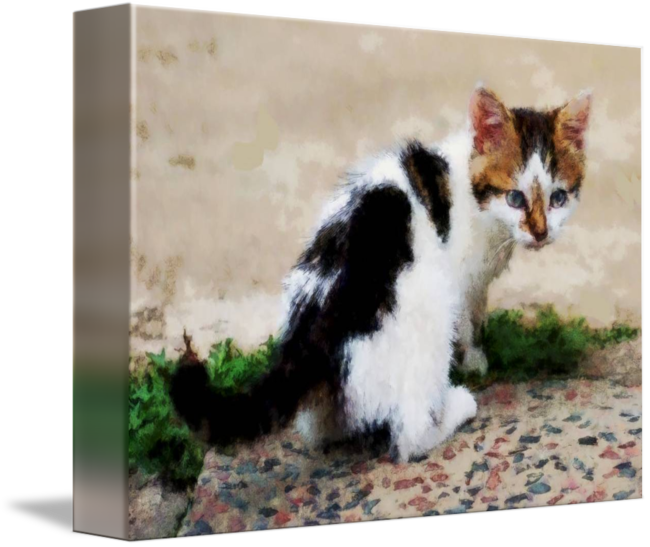 Drawing chalk animal. Of spotty kitten by