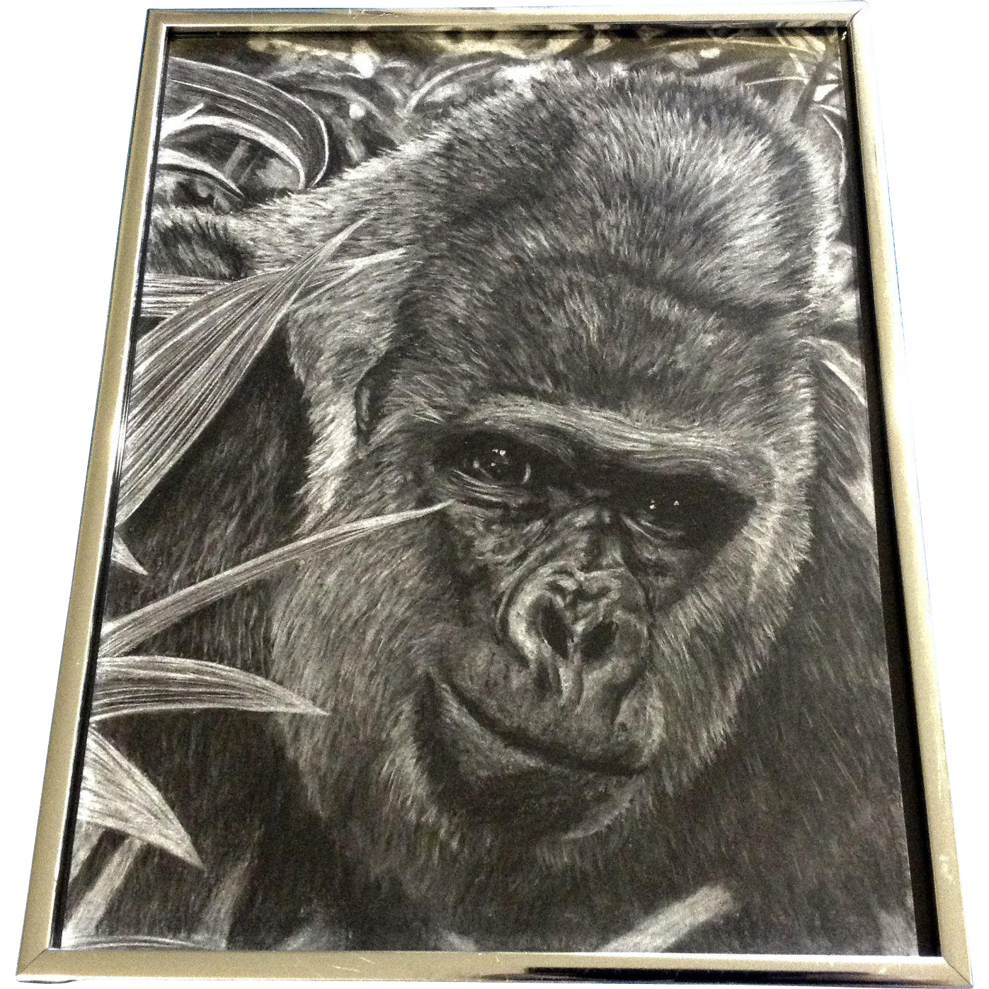 Drawing medium mixed. Gorilla ape realist pencil