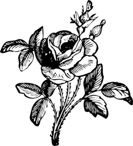 Drawing medium rose. Of a clip art