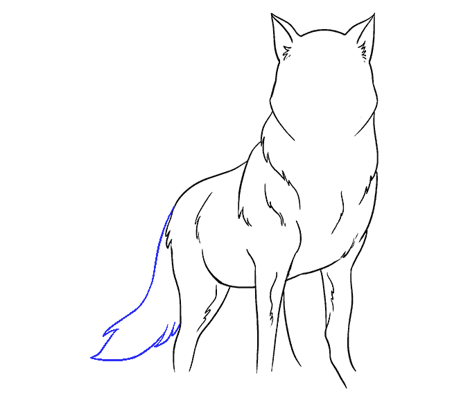 Drawing medium wolf. How to draw a