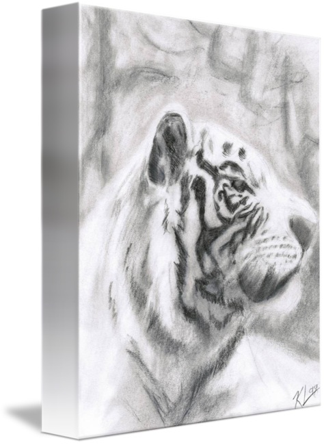 Drawing methods hyperrealism. White tiger by kevin