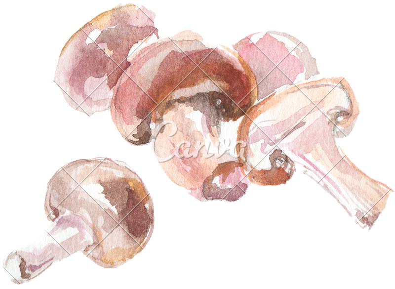 Drawing mushrooms. Watercolor of button photos