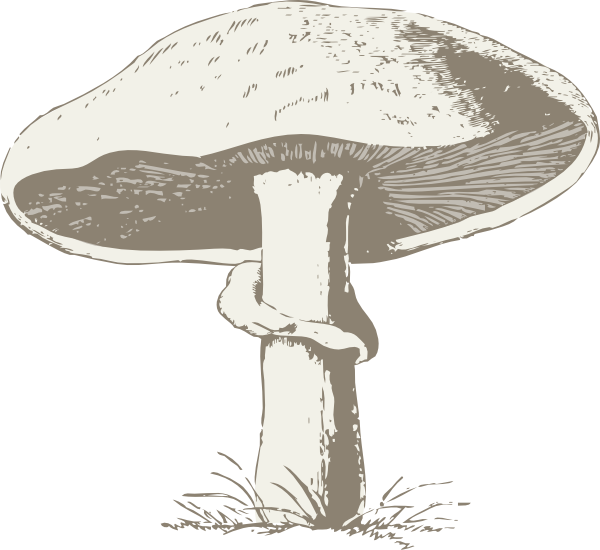 Drawing shrooms. Mushroom clip art at banner transparent library