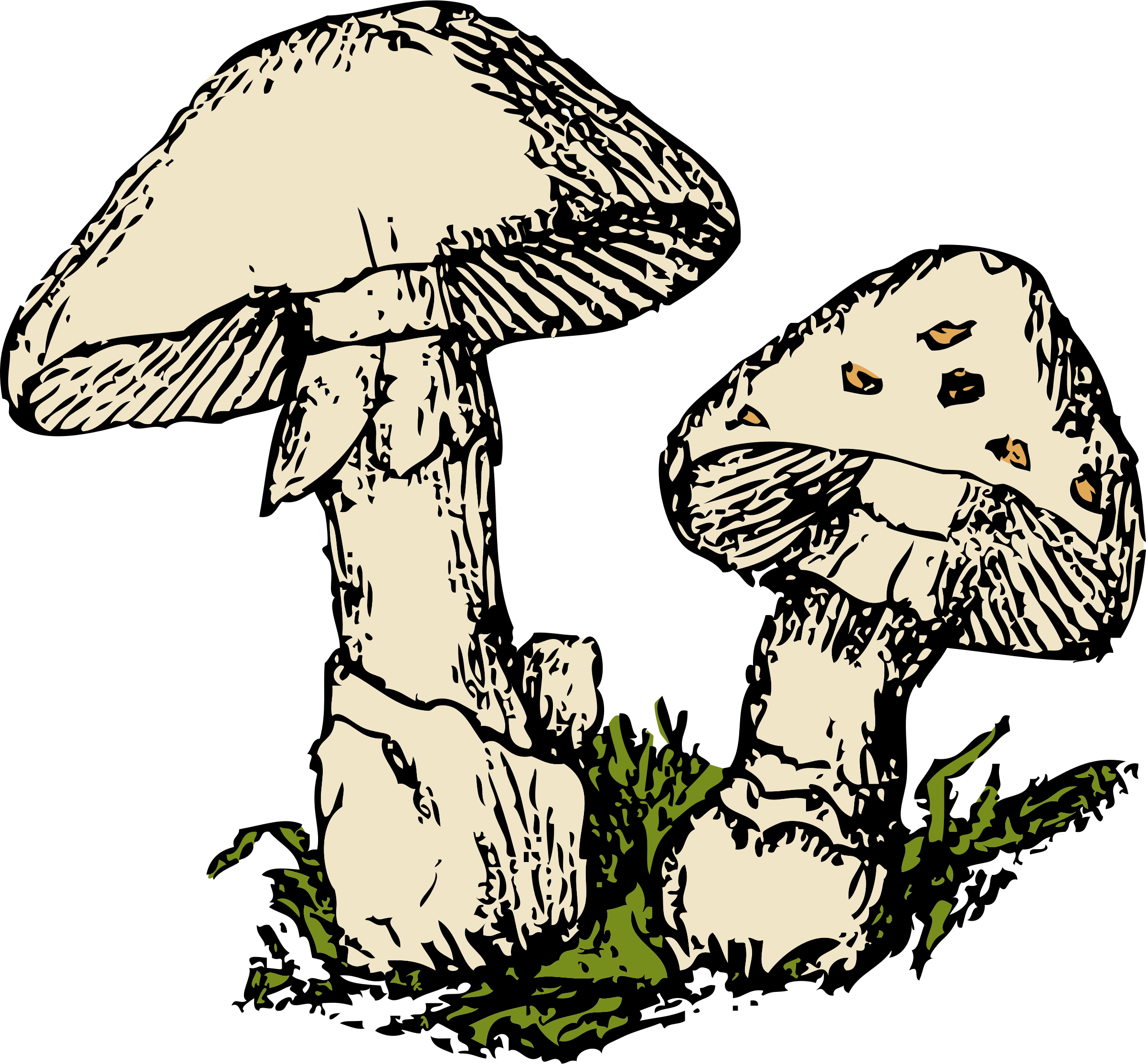Drawing mushrooms plant. Clipart two big image
