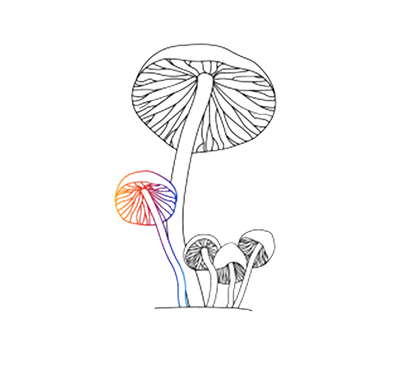 Drawing shrooms psychedelic mushroom. Magic mushrooms the third royalty free library