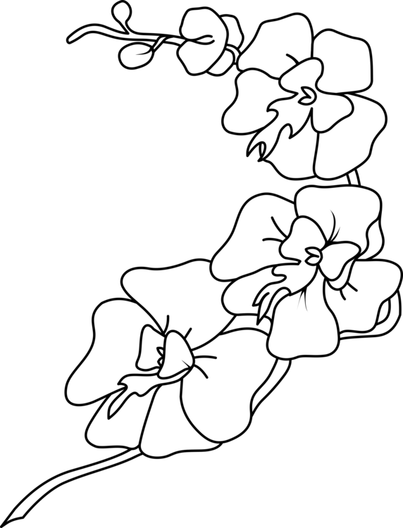 Drawing orchid color. Orchids coloring book growing