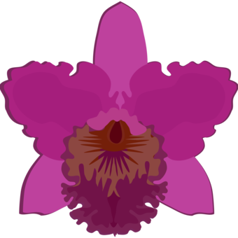 Drawing orchid dancing lady. Moth orchids flowering plant