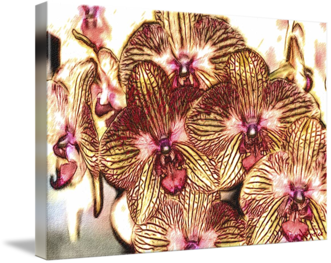 Drawing orchid red. Detail of yellow orchids
