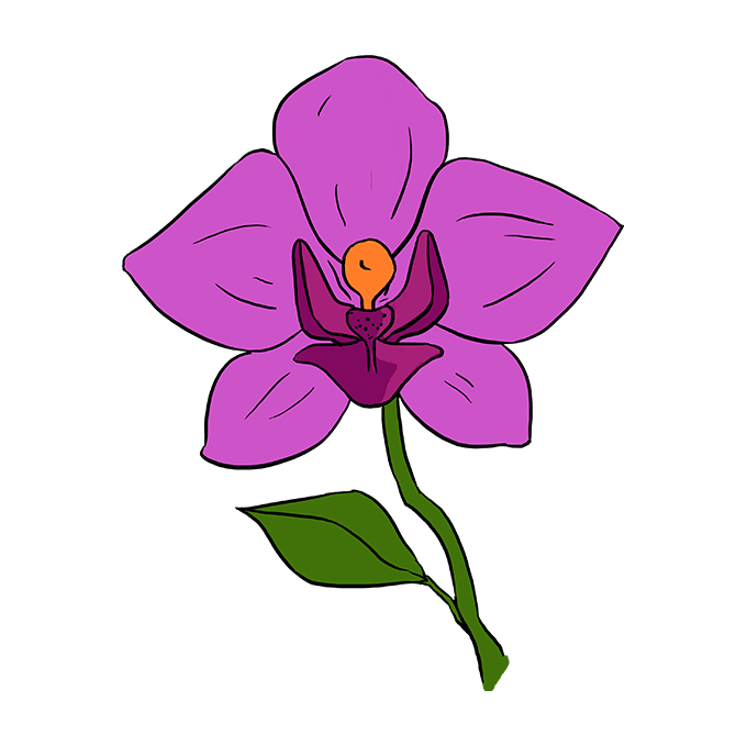 Drawing orchid blooming. How to draw a