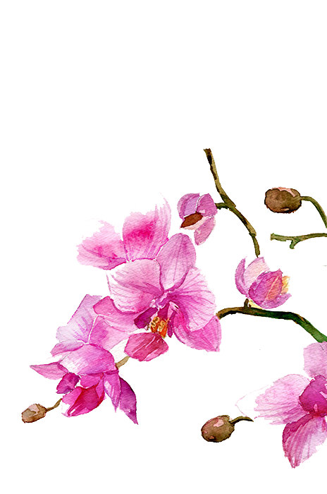 Drawing orchid watercolor. Watercolour flowers painting transprent
