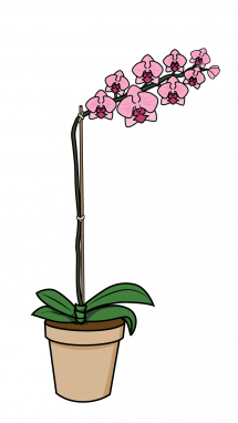 drawing orchid