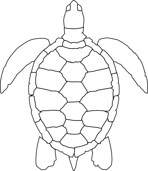 Drawing ovals sea turtle. Best photos of