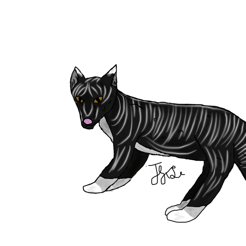 Drawing panther pen. Wolf play the land