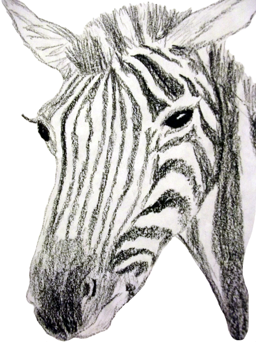 Zebra in by wyverntales. Seulgi drawing pastel clipart library download