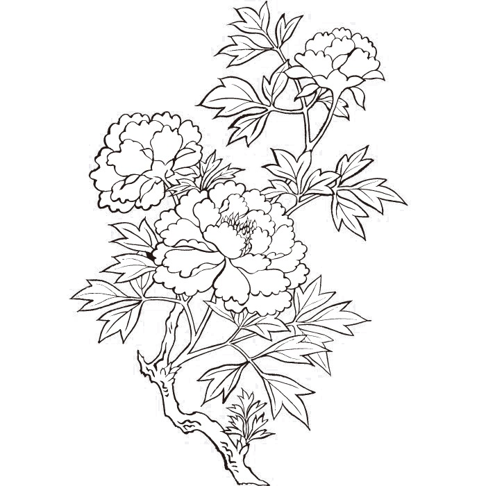 Drawing peony. Flower painting vector printing