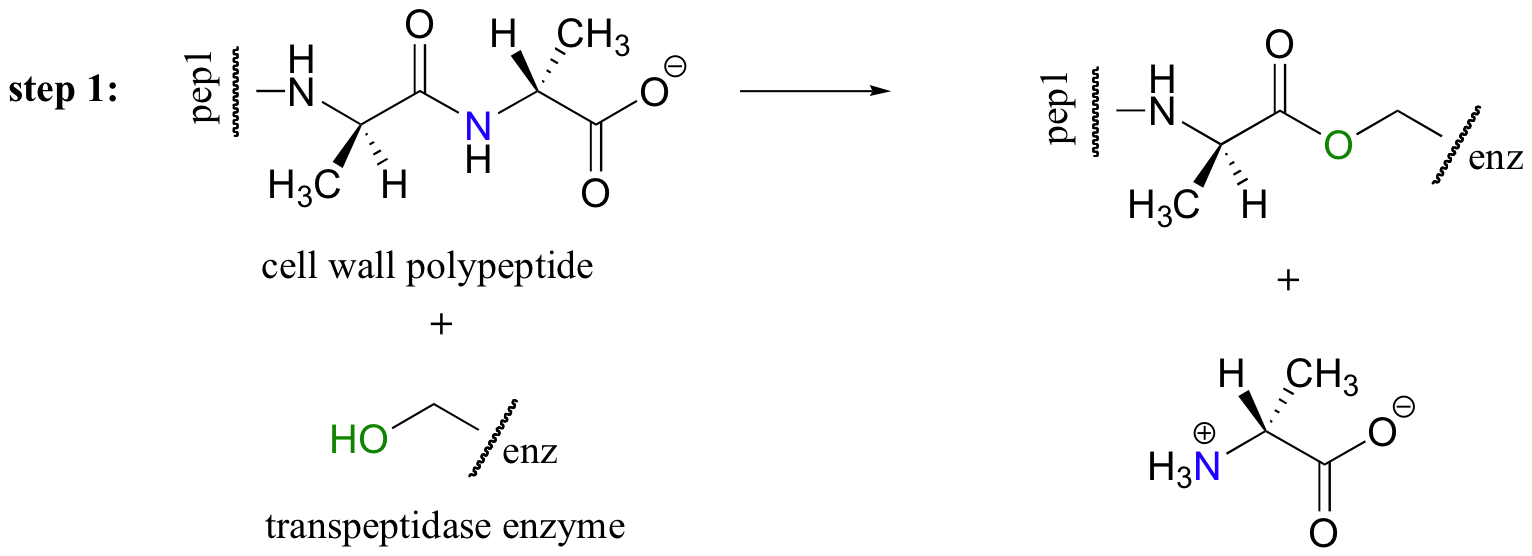 Drawing peptides amides. Nucleophilic acyl substitution