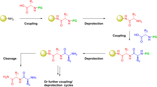 Drawing peptides amides. Peptide synthesis wikipedia solidphase