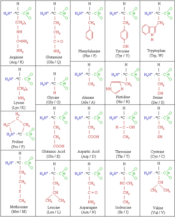 Drawing peptides amino acid. Biochemistry proteins the chemistry