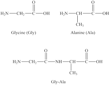 Drawing peptides gly. Solved draw all the