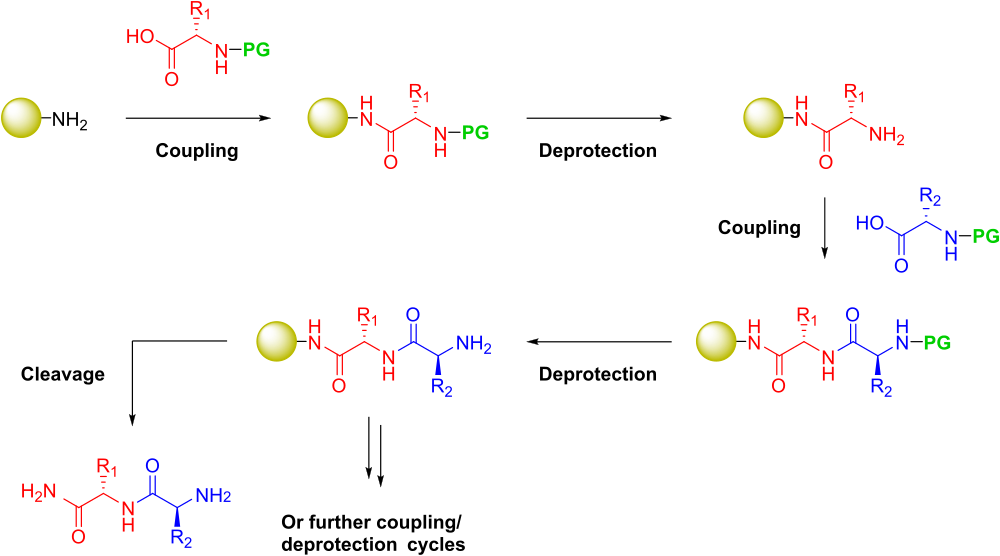 Drawing peptides synthesis. Peptide wikiwand solidphase